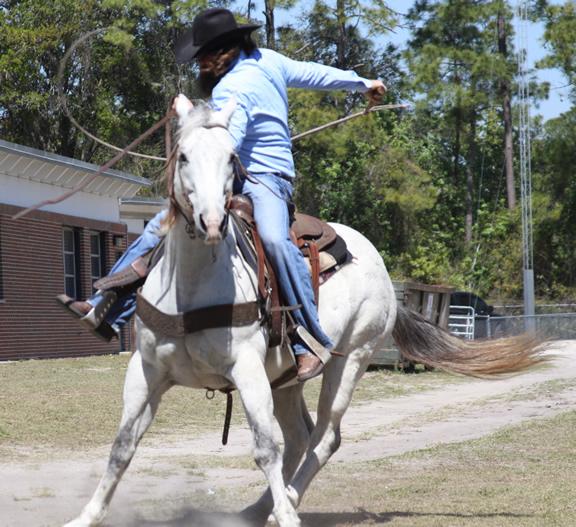 Horsespin